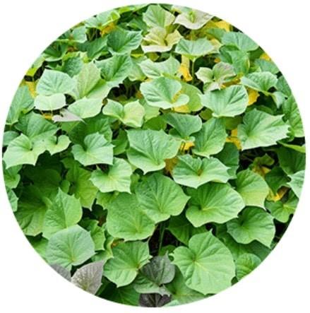 スーナバイオショットの植物成分