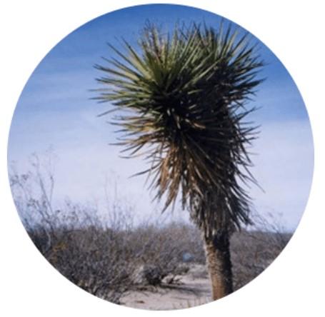 スーナバイオショット植物成分